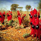 Sturt Desert Pea  by Emma  Gilette