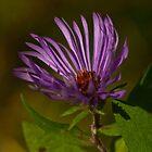 Purple  by Al Duke
