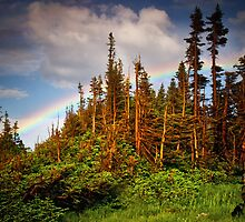 Rainbow Forest by John  De Bord Photography