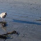 Little Gull Afraid of His Own Shadow by Jane Neill-Hancock