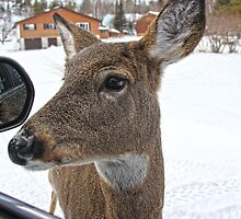 Objects In The Mirror Are Closer Than They Appear by Vickie Emms