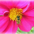 Bee Mel in Pink by Carmel Abblitt