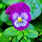 Purple Pansy by anchorsofhope