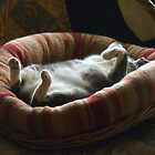 I think she is relaxed! by Odille Esmonde-Morgan