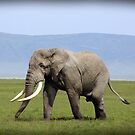 elEphant! by tracyleephoto