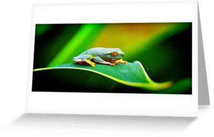Tree Frog by tracielouise