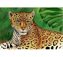 Jaguar (Panthera onca) Photographic Print