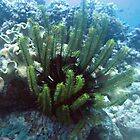 Green Feather Star Fish by springs