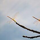 Taking off. by Dawid Groenenstein