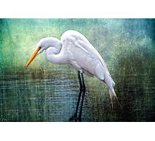 Great White Egret at Work Photographic Print