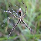 &quot;Come A Little Closer&quot; Said The Spider To The Fly by Tracy Faught
