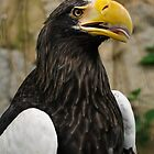 American Eagle (if I'm not mistaken!) by Sammy77