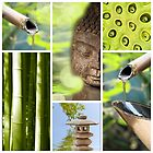 Green Bouddha - Collage by Delphimages