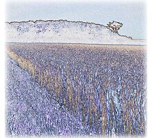 Fields of gold Kearney as Vincent may have captured it by ragman