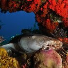 Nurse Shark by MattTworkowski