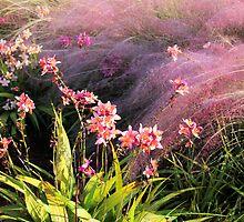 Dance of the Orchids by Rosalie Scanlon