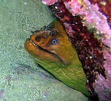 The Head- Grenn Moray Eel Head  by springs