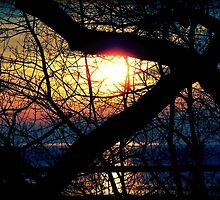 Sunrise © by Dawn M. Becker