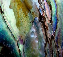 Paua Shell from New Zealand by M. van Oostrum