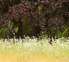 Softness of Summertime. by CJTill