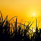 Sunrise through the reeds by Gary Rayner
