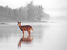 Deer - Selective Colour - Dunrobin Ontario by Debbie Pinard