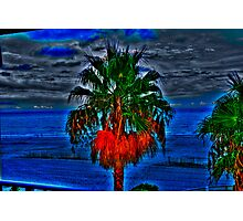Blue Palm Tree Photographic Print