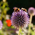 Bumbling Bees by Ross Buchanan