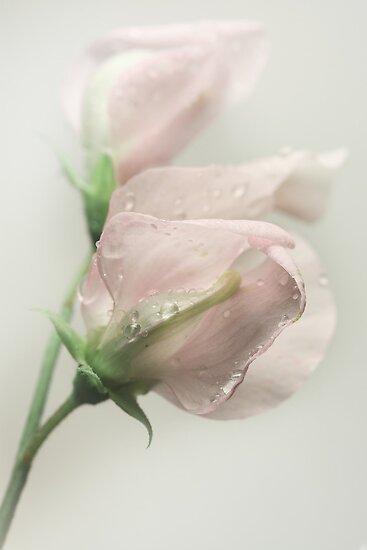 Perfume by EbyArts