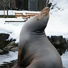 Seal, Central Park Zoo by lenspiro