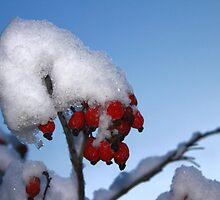 Winter Berries by Ross Buchanan