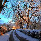 Snow Tracks by Ross Buchanan