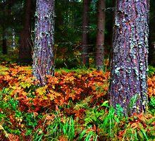 Autumn Forest III by SunDwn