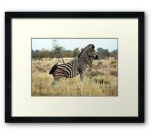 Plains Zebra #2 Framed Print