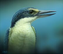 """""""Sacred Kingfisher"""" Portrait by Christopher Pope"""