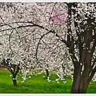 Primavera a Polonia . Spring at Cracow . Poland. Polen.Pologne. I am especially grateful to EVERYBODY for ALL the wonderful, encouraging comments ! Views (478) Favorited by # (4) # . Thank you ! by © Andrzej Goszcz,M.D. Ph.D