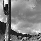 Arizona Terrain  by Glenn McCarthy