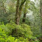 Yarra Ranges Rainforest. by Bette Devine