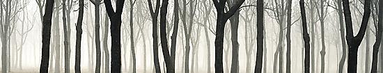 ''The Longest Dream'' by Birgitta   †