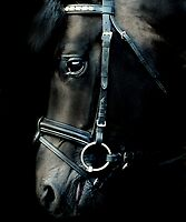 The black stallion by Alan Mattison IPA