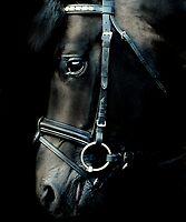 The black stallion by Alan Mattison