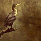 Cormorant (Aalscholver) by Yool
