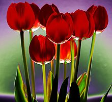 Stylized Red Tulip by Heather  McCann