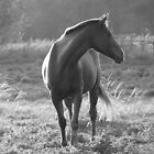 Dutch Warmblood by Anita  Fletcher