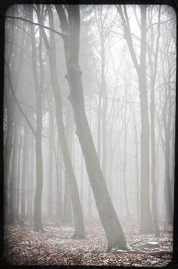 misty forest III by Iris Lehnhardt