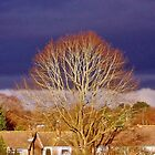 silhouette tree by carolhynes