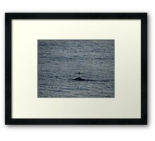Whale And Dolphin - Ballena Y Delfin Framed Print