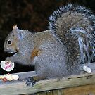 Nuts About You... by deb cole
