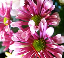 Delirious Daisies by MarianBendeth