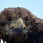 Eagle Stare by Peter Barrett